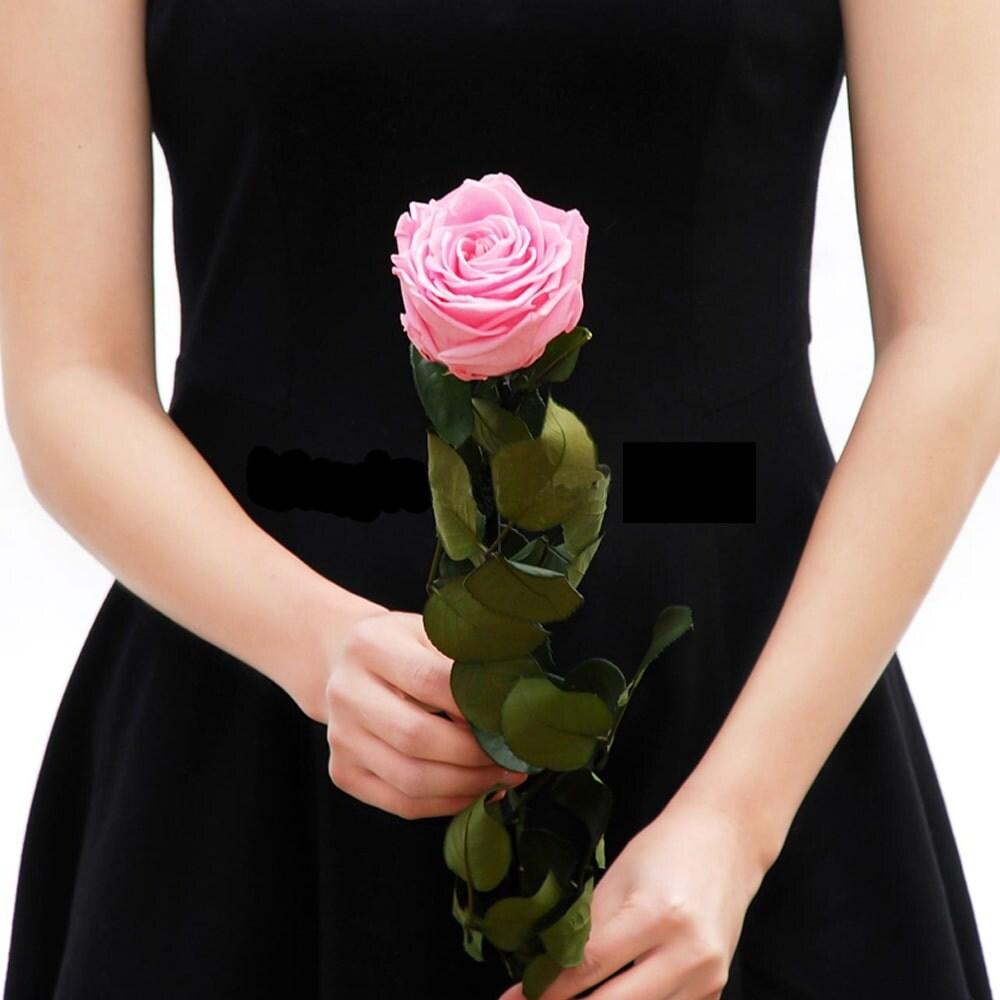 Uinuvad roosid